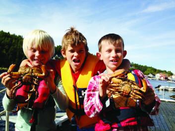 KRABBEKONGER: Høsten er fin tid på sjøen, synes Olav, Per Kristian og Henrich.