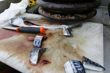 UTEN TILSETNINGSSTOFFER: Kolstø har tatt med seg noen makreller og reker som agn.