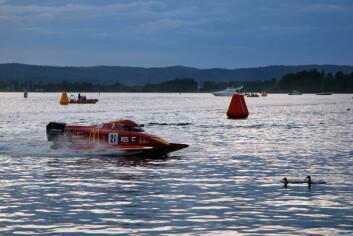 ENDER I BANEN: En liten andrefamilie dukket opp under båtracet, men kom seg ut av banen.