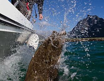 5 båtnyheter som bør gi napp!