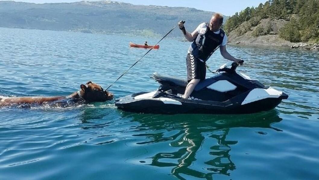 REDDET KU: Tor Arne Thunestveit med en Sea Doo Spark vannscooter.