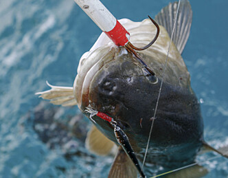 Vil forby all fiske i vinter