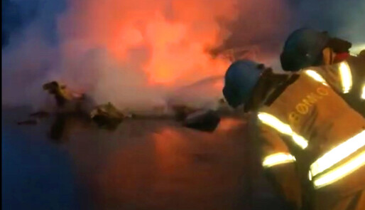 Storbrann i båthavn