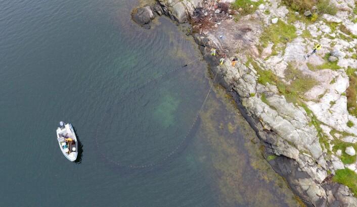 MÅLINGER: Med strandnot er det gjort grundige undersøkelser for å finne mengden av torskeyngelens favorittmat.
