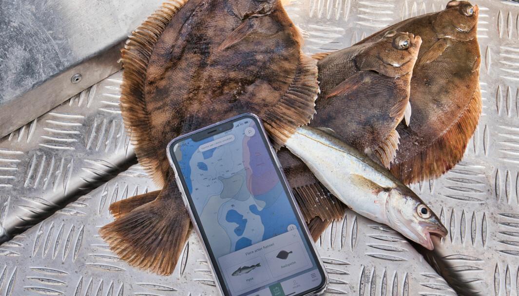 POPULÆR APP: FiskHer topper nedlastninger både for Android og iPhone, bare noen få dager etter lansering.