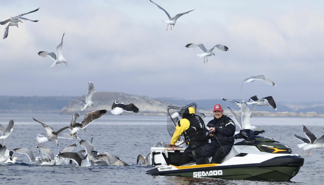 TEGN PÅ FISK: Når måkene flokker seg rundt vannscooteren er det ikke noe tvil om at det er blitt fangst.