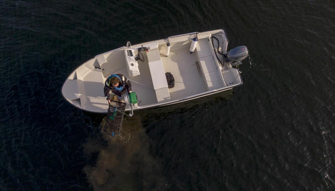 HUMMERFISKE: Reglene er mange. Kan du dem? Prøv Båtmagasinets hummer-quiz.