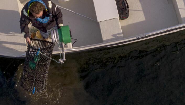 Quiz: Hvor mye kan du om hummerfiske?