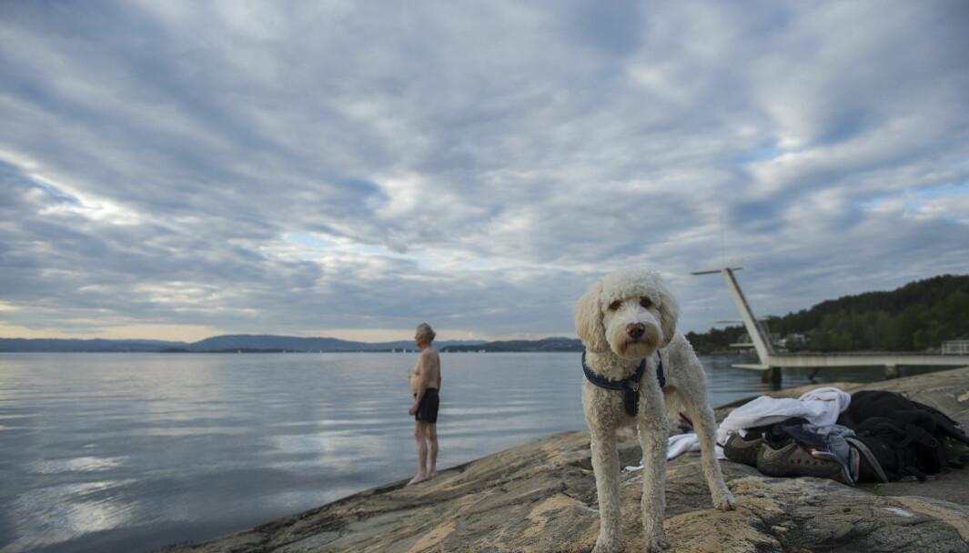 Badeulykker trekker opp drukningsstatistikken i sommer.